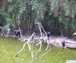 Sân chim Bạc Liêu