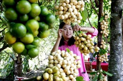 Vườn cây trái Lái Thiêu