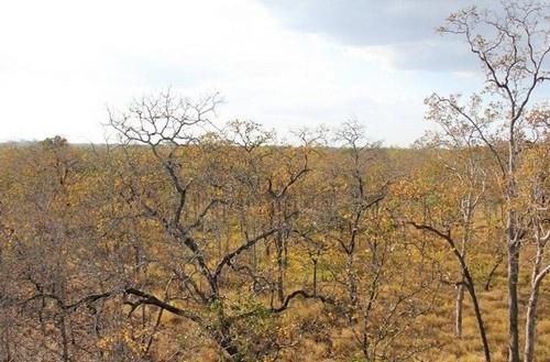 Vườn quốc gia Yok Don
