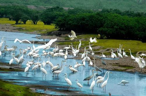Vườn quốc gia Xuân Thủy