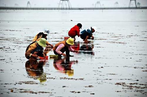 Bãi biển Đồng Châu - trẻ em bắt con ngón tay