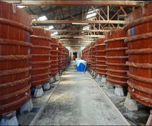 Visit a fish sauce factory