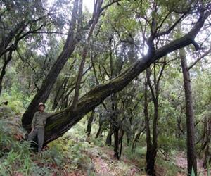 Khu bảo tồn thiên nhiên Ngọc Linh