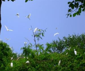 Vườn cò Tân Long