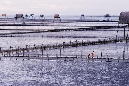 Bãi biển Đồng Châu mang vẻ đẹp rất riêng