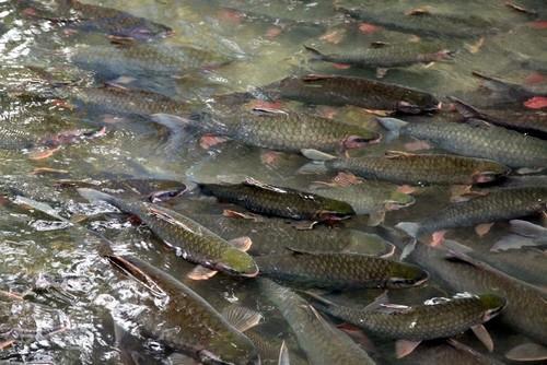 Suối cá Cẩm Lương Cẩm Thủy Thanh Hóa