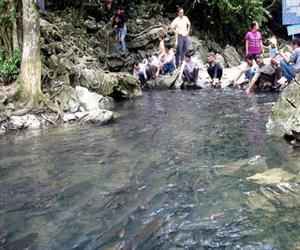 Khách du lịch suối cá thần Cẩm Lương Thanh Hóa