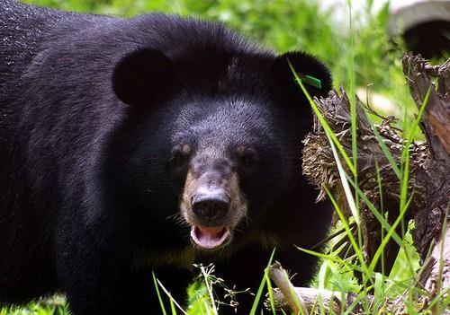 Trung tâm cứu hộ Gấu