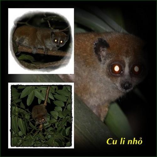 Soi thú đêm ở Vườn quốc gia Bù Gia Mập