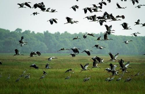 Vườn quốc gia Tràm Chim với dự án bảo tồn và phát triển