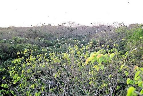 Vườn chim Bạc Liêu vào mùa hấp dẫn du khách