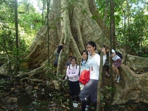 Xem cây cổ thụ ở Vườn quốc gia Cát Tiên