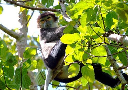 Xem vượn hoang dã ở Vườn quốc gia Cát Tiên