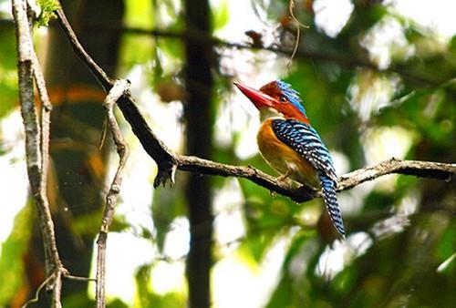 Xem chim hoang dã ở Vườn quốc gia Cát Tiên
