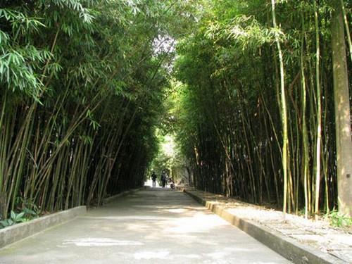 Đền Trúc - Ngũ Động Thi Sơn