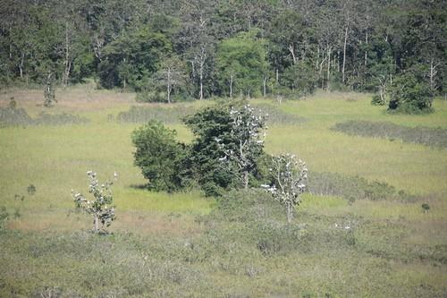 Tuyến rừng xanh ở Vườn quốc gia Lò Gò Xa Mát
